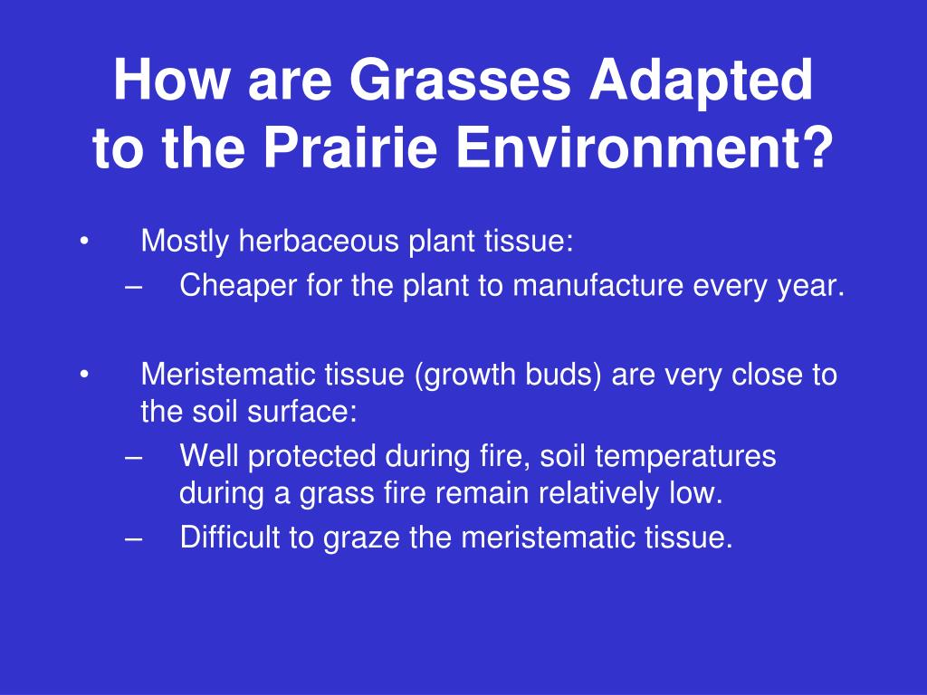 How are Grasses Adapted to the Prairie Environment?