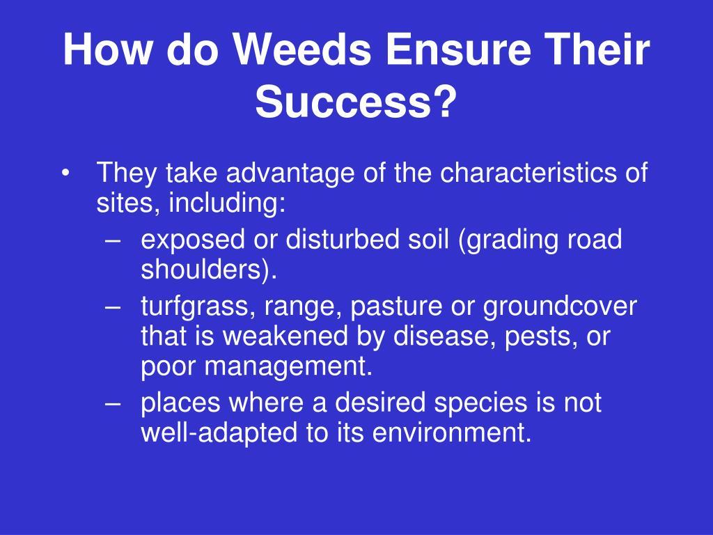 How do Weeds Ensure Their Success?
