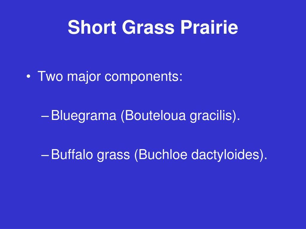 Short Grass Prairie