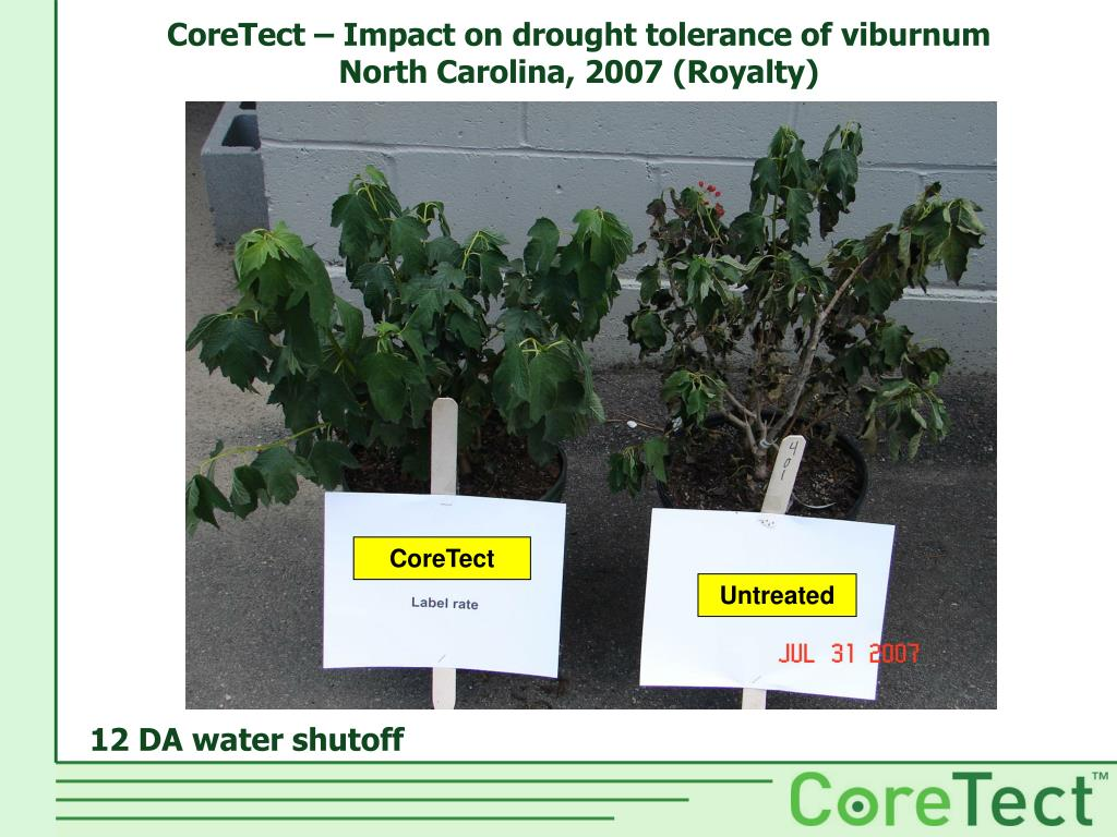 CoreTect – Impact on drought tolerance of viburnum