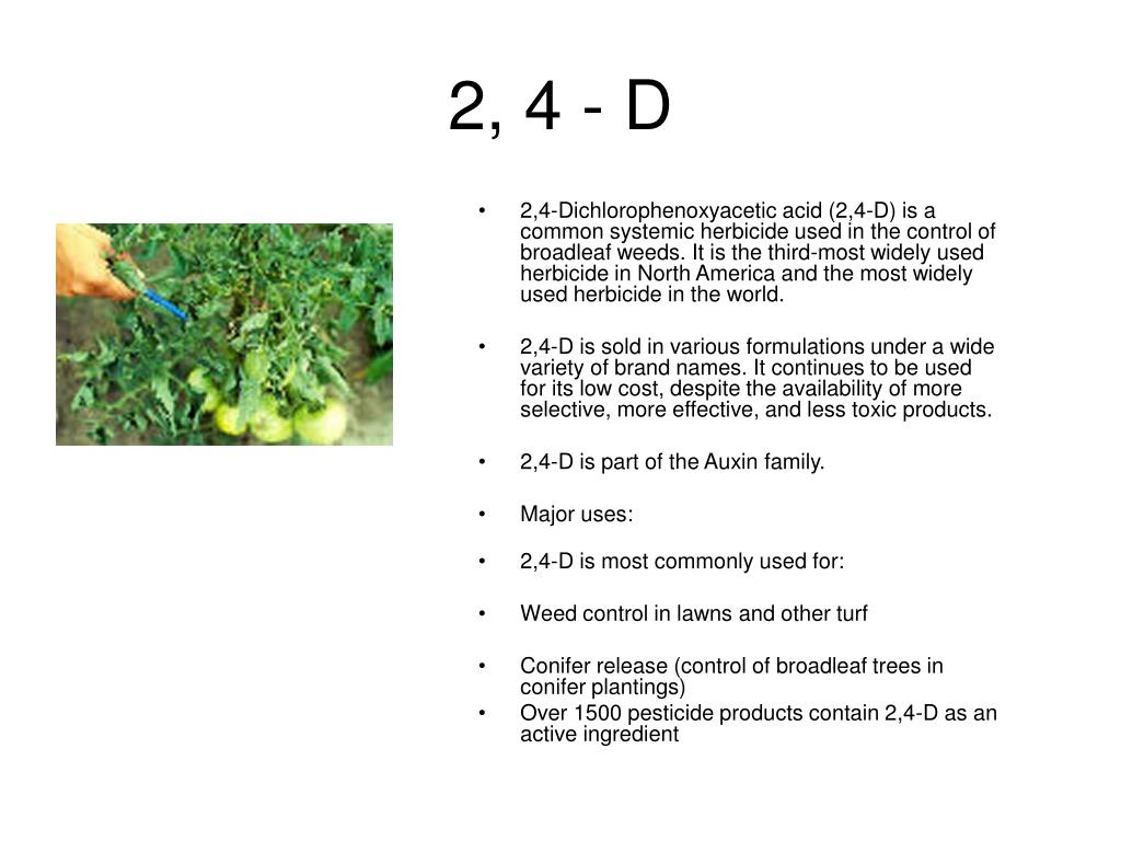 2, 4 - D