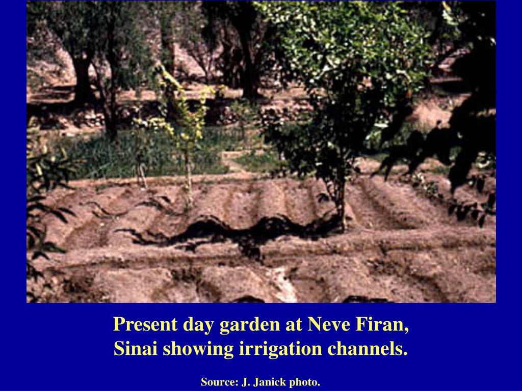 Present day garden at Neve Firan,