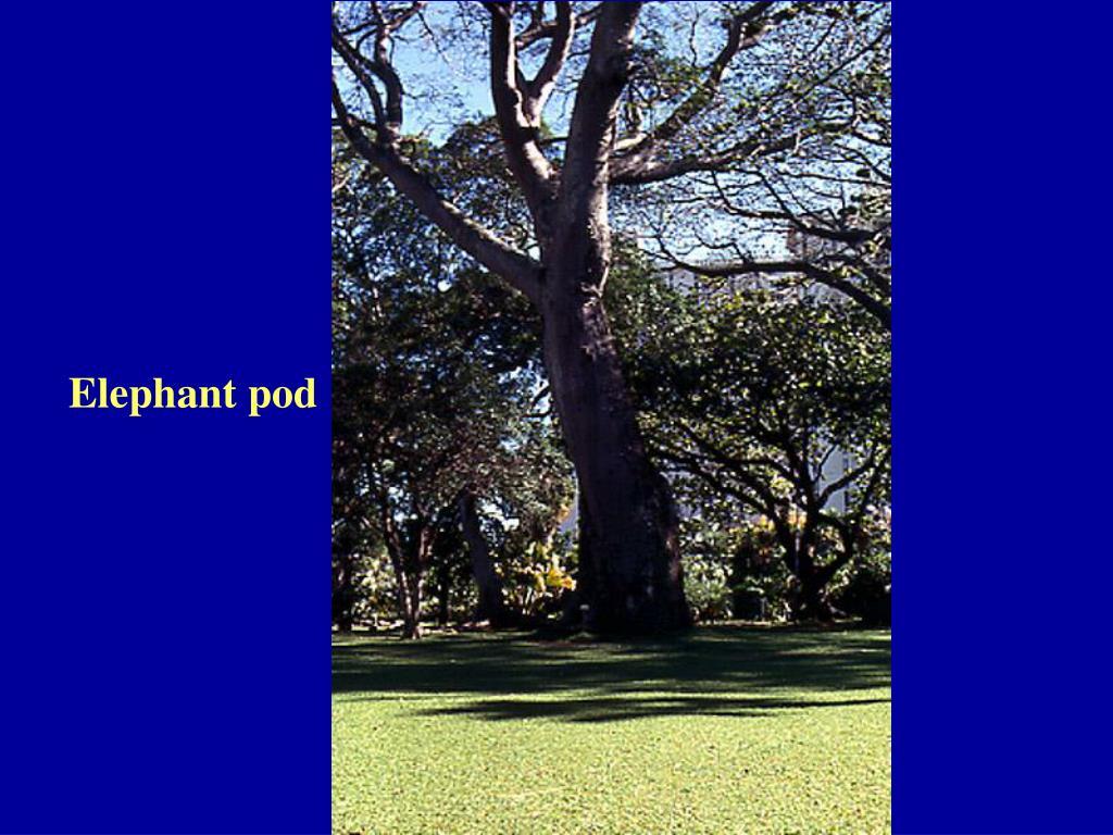 Elephant pod