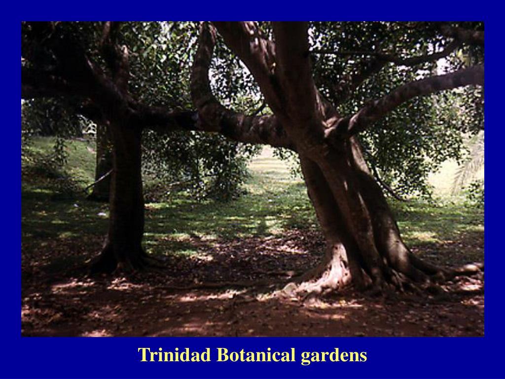 Trinidad Botanical gardens
