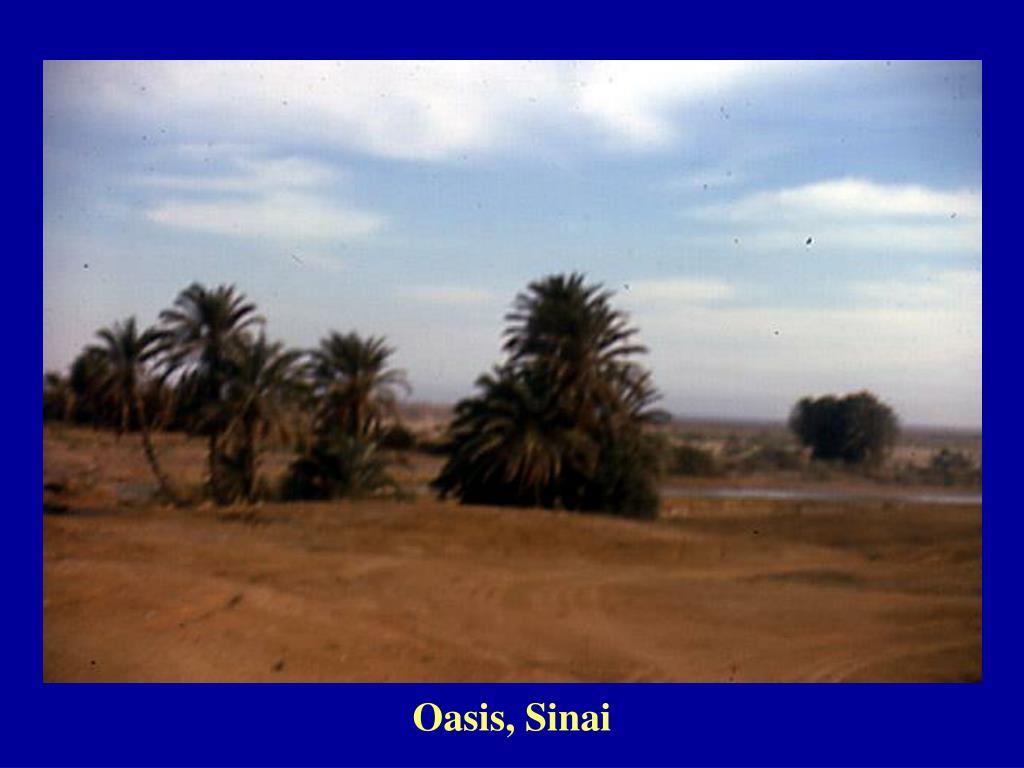 Oasis, Sinai