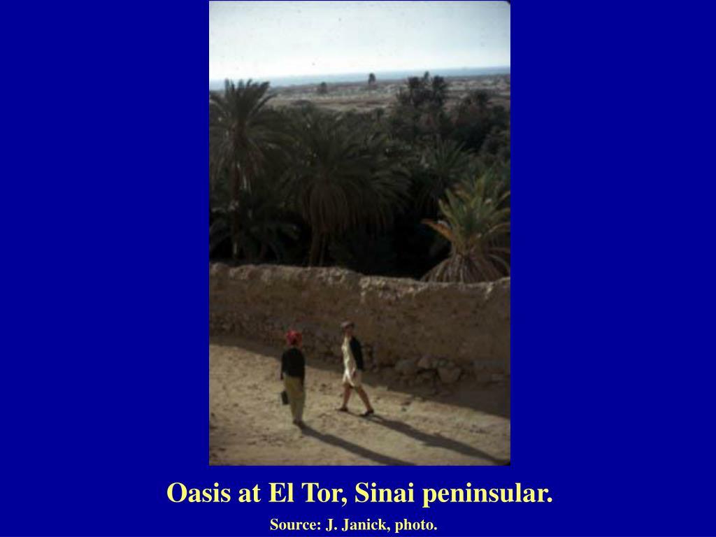 Oasis at El Tor, Sinai peninsular.
