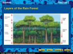 layers of the rain forest11