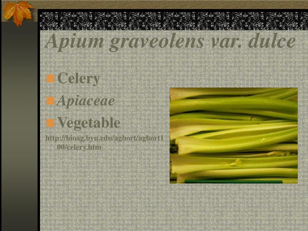 Apium graveolens var. dulce