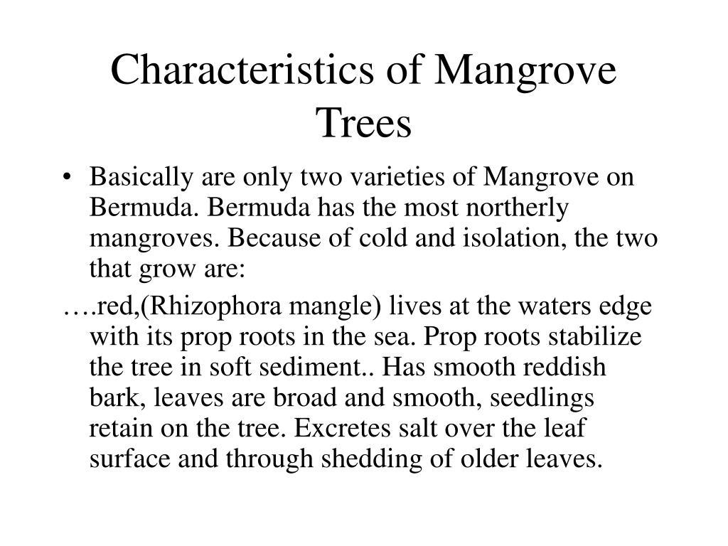 Characteristics of Mangrove Trees
