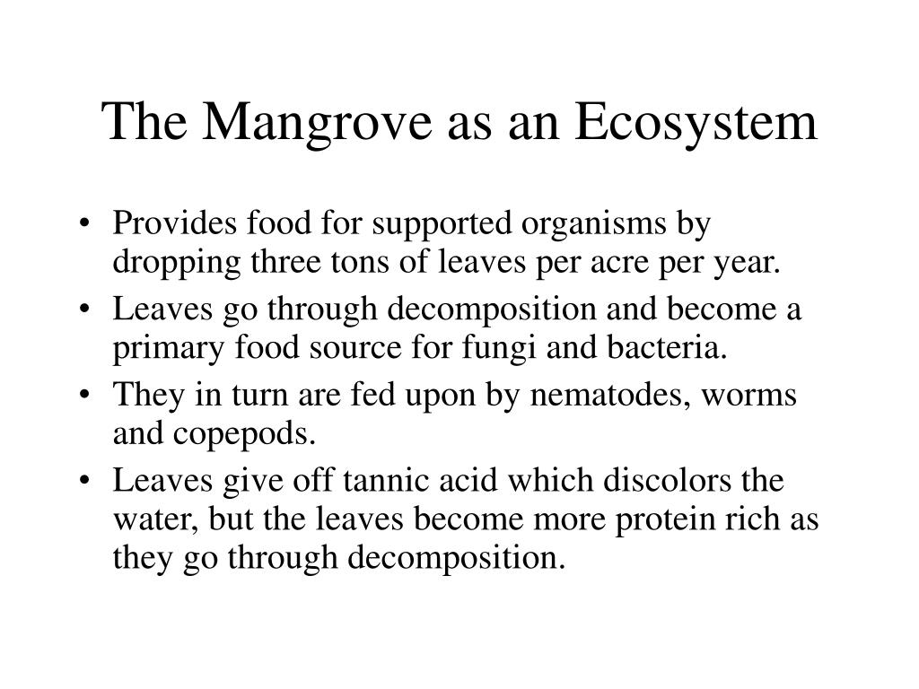 The Mangrove as an Ecosystem