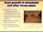 root growth in structural soil after three years
