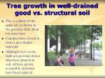 tree growth in well drained good vs structural soil