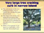 very large tree cracking curb in narrow island
