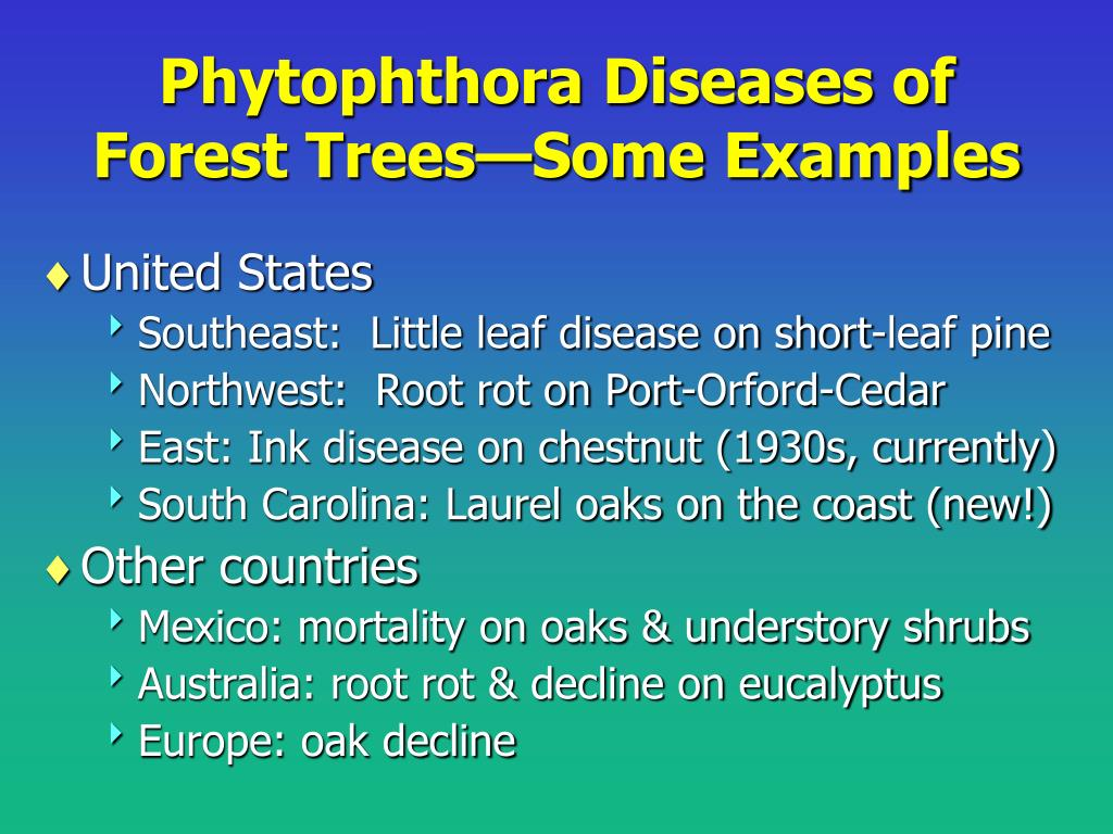 Phytophthora Diseases of Forest Trees—Some Examples