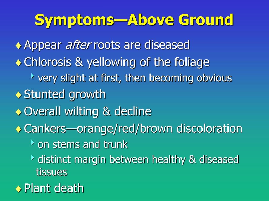 Symptoms—Above Ground