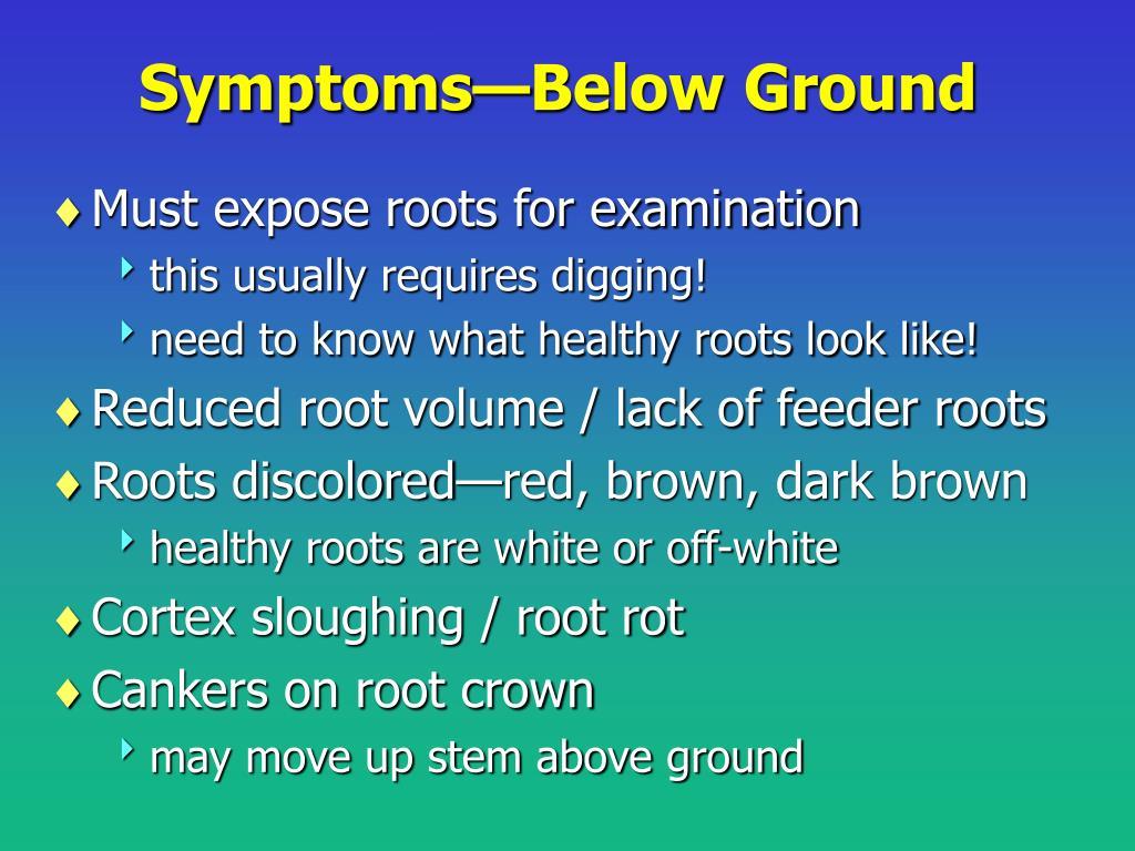 Symptoms—Below Ground