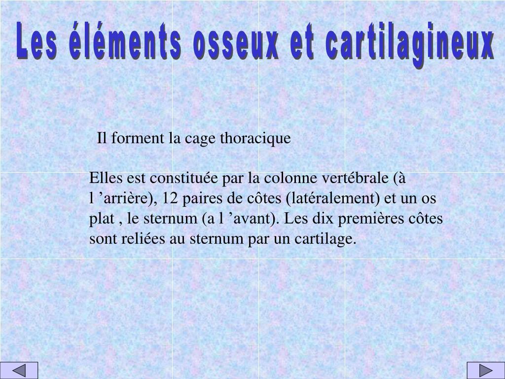 Les éléments osseux et cartilagineux