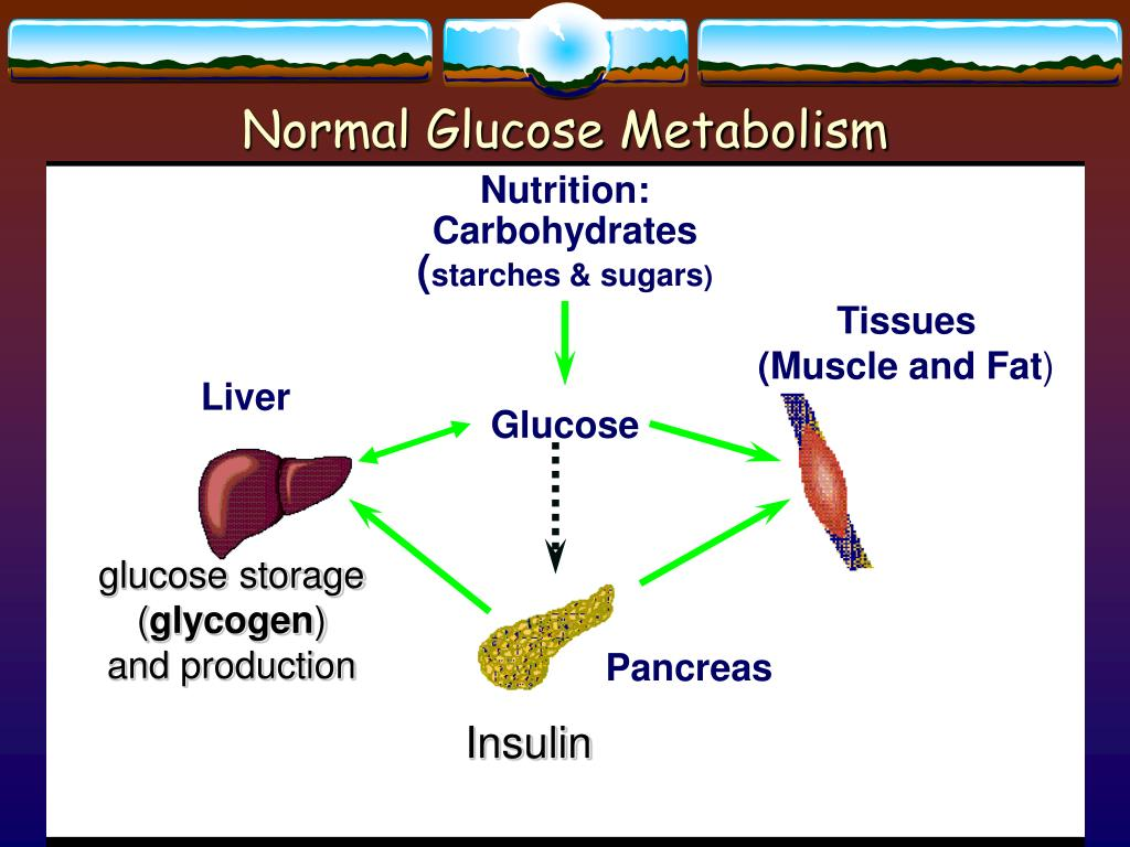 Normal Glucose Metabolism