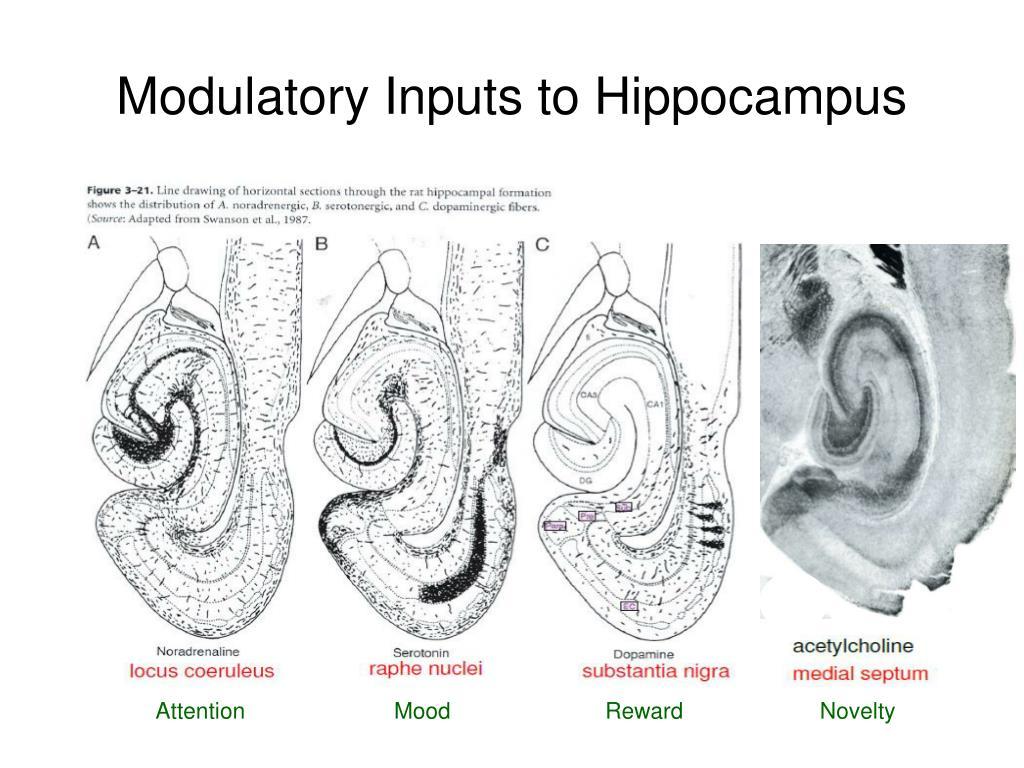 Modulatory Inputs to Hippocampus