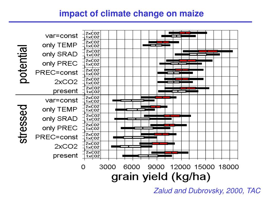 impact of climate change on maize
