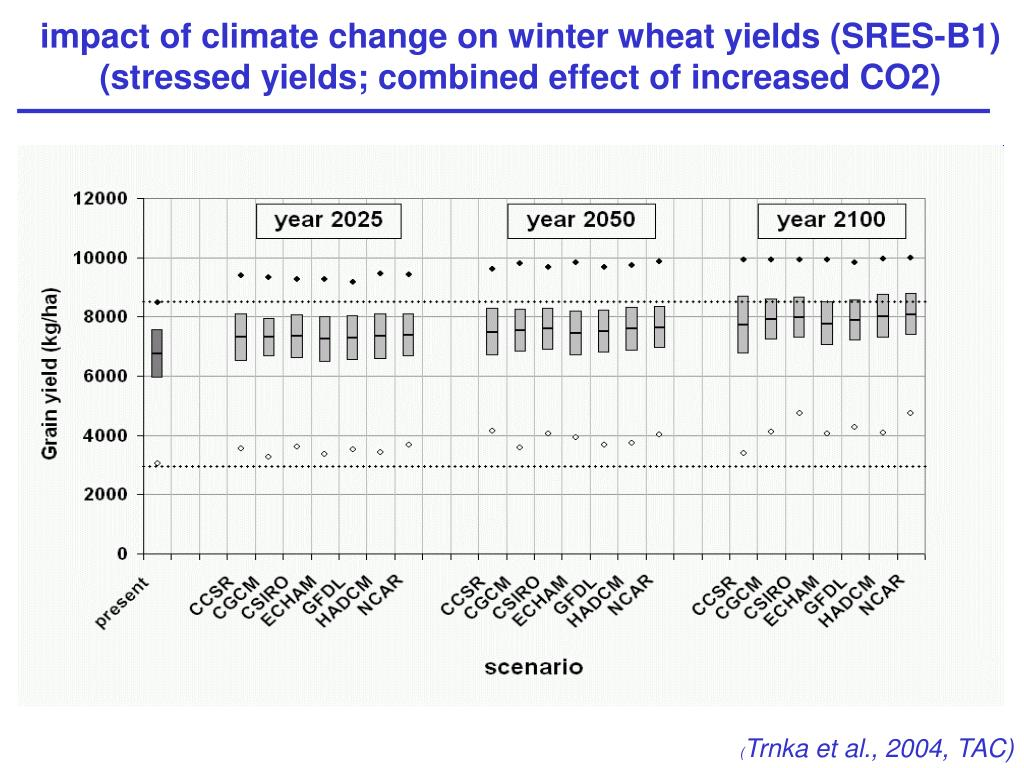 impact of climate change on winter wheat yields (SRES-B1)