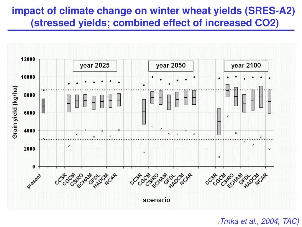 impact of climate change on winter wheat yields (SRES-A2)