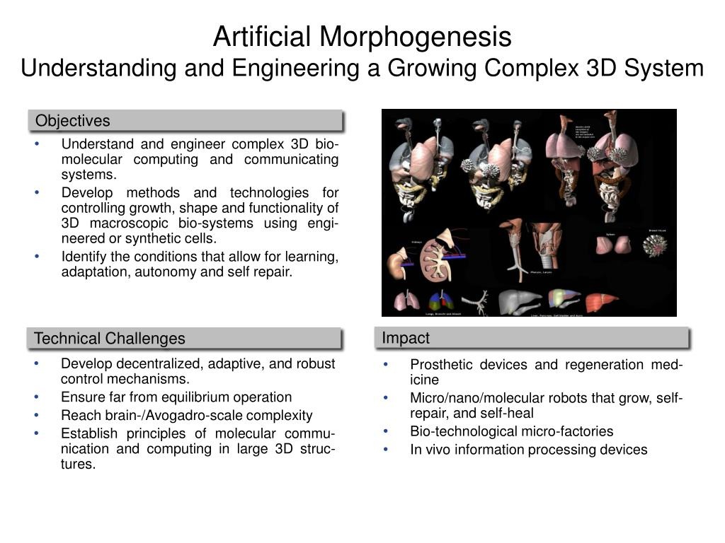 Artificial Morphogenesis