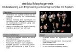 artificial morphogenesis understanding and engineering a growing complex 3d system