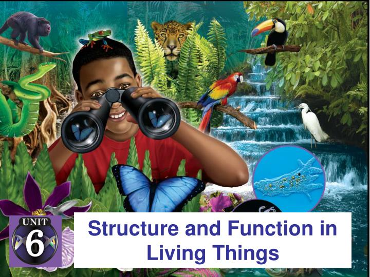 Structure and function in living things l.jpg