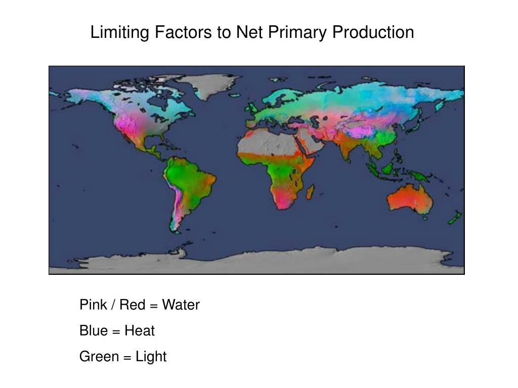 Limiting Factors to Net Primary Production