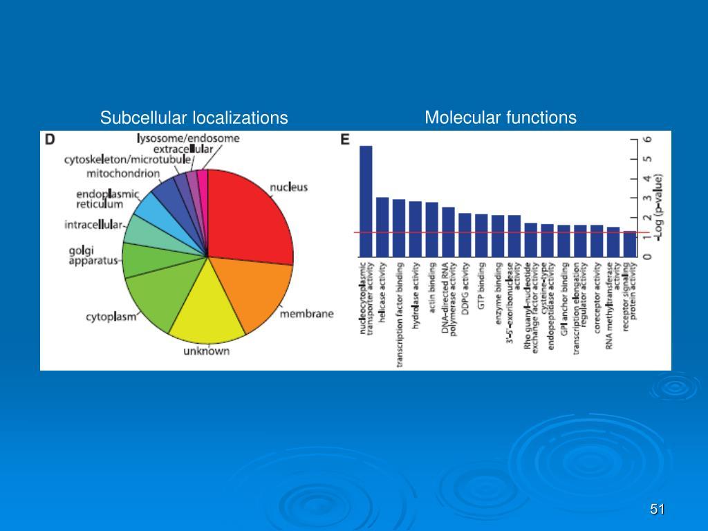 Molecular functions