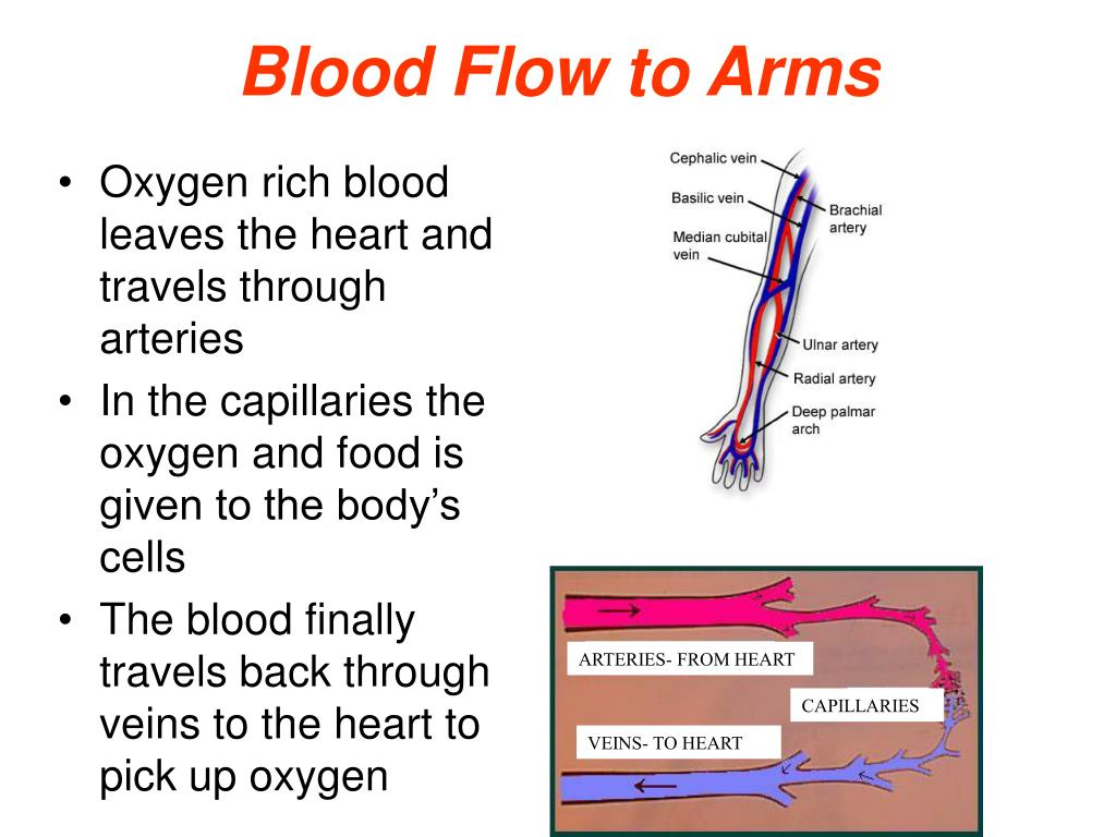 Blood Flow to Arms