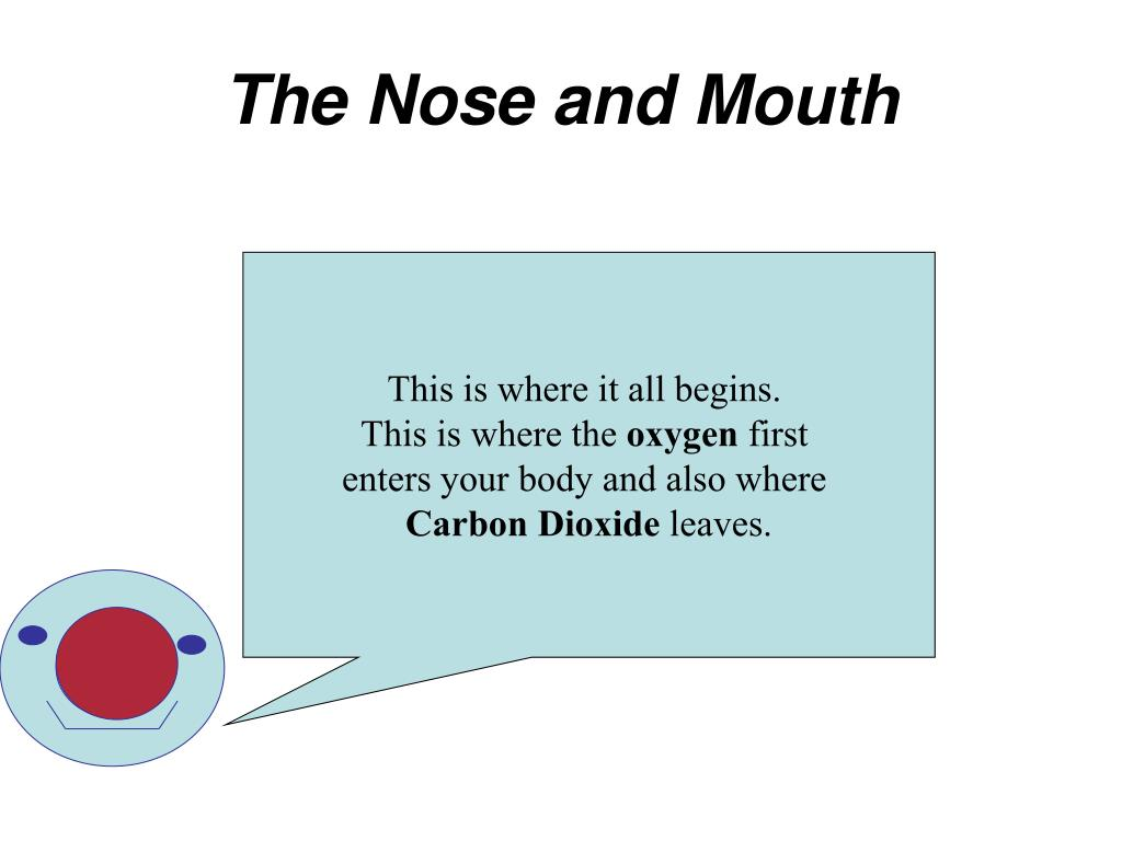 The Nose and Mouth