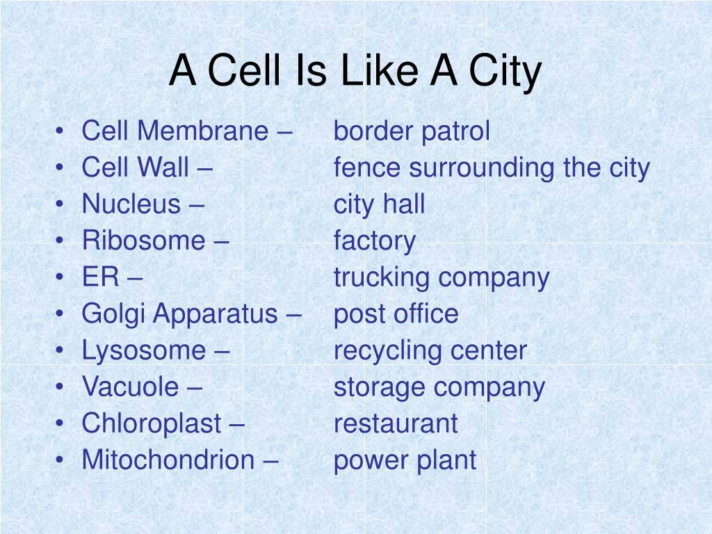 Cell Membrane –