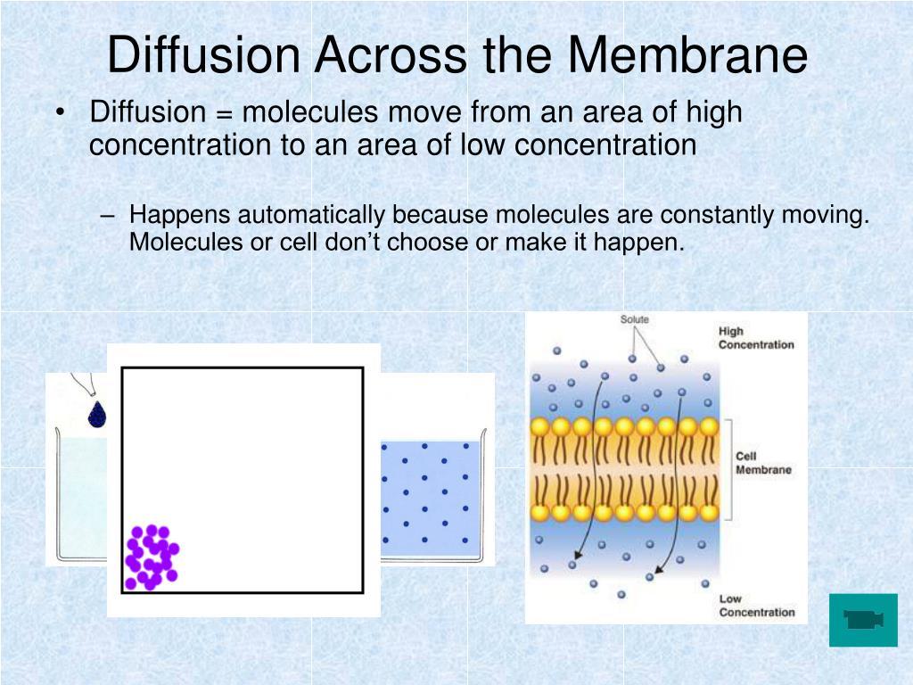 Diffusion Across the Membrane