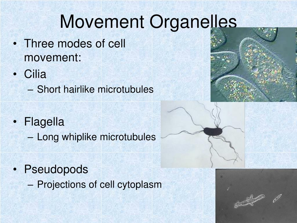 Movement Organelles