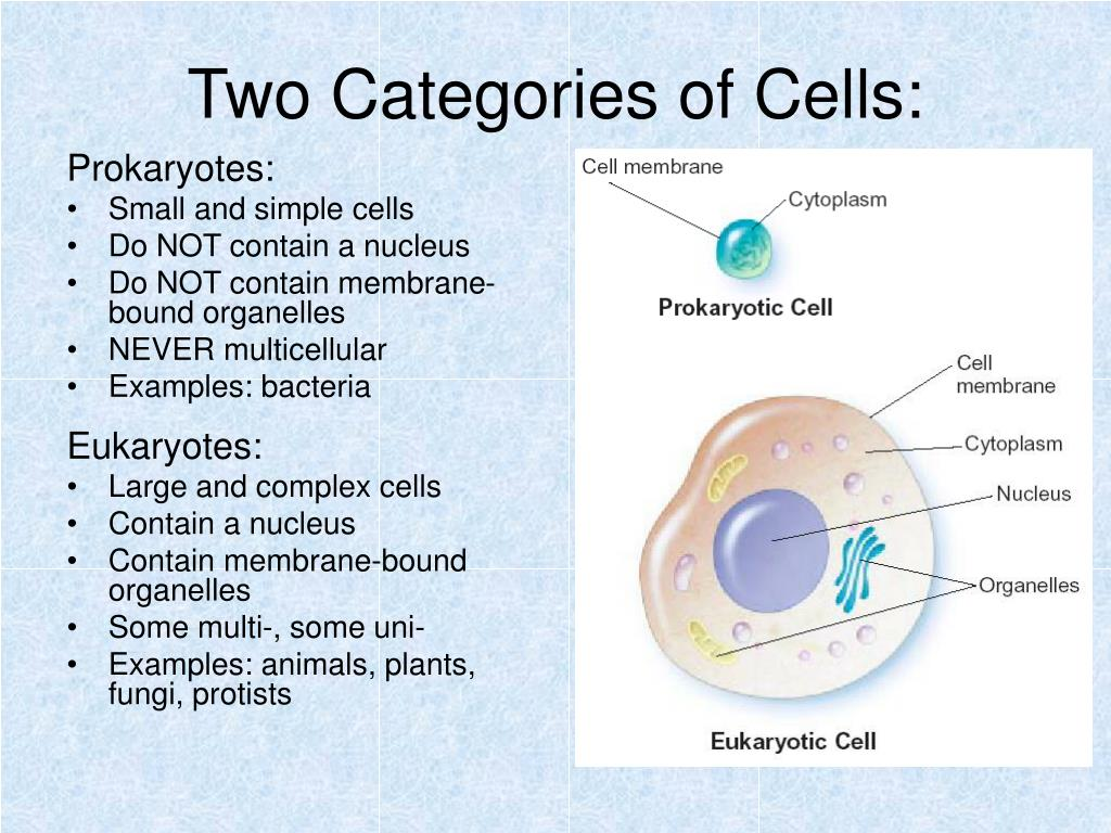 Two Categories of Cells: