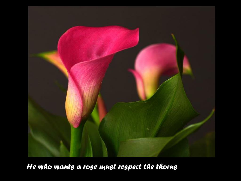 He who wants a rose must respect the thorns