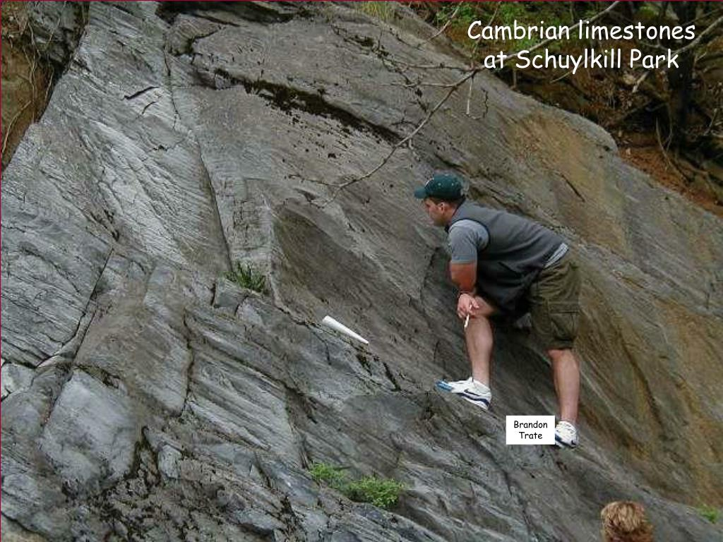 Cambrian limestones at Schuylkill Park