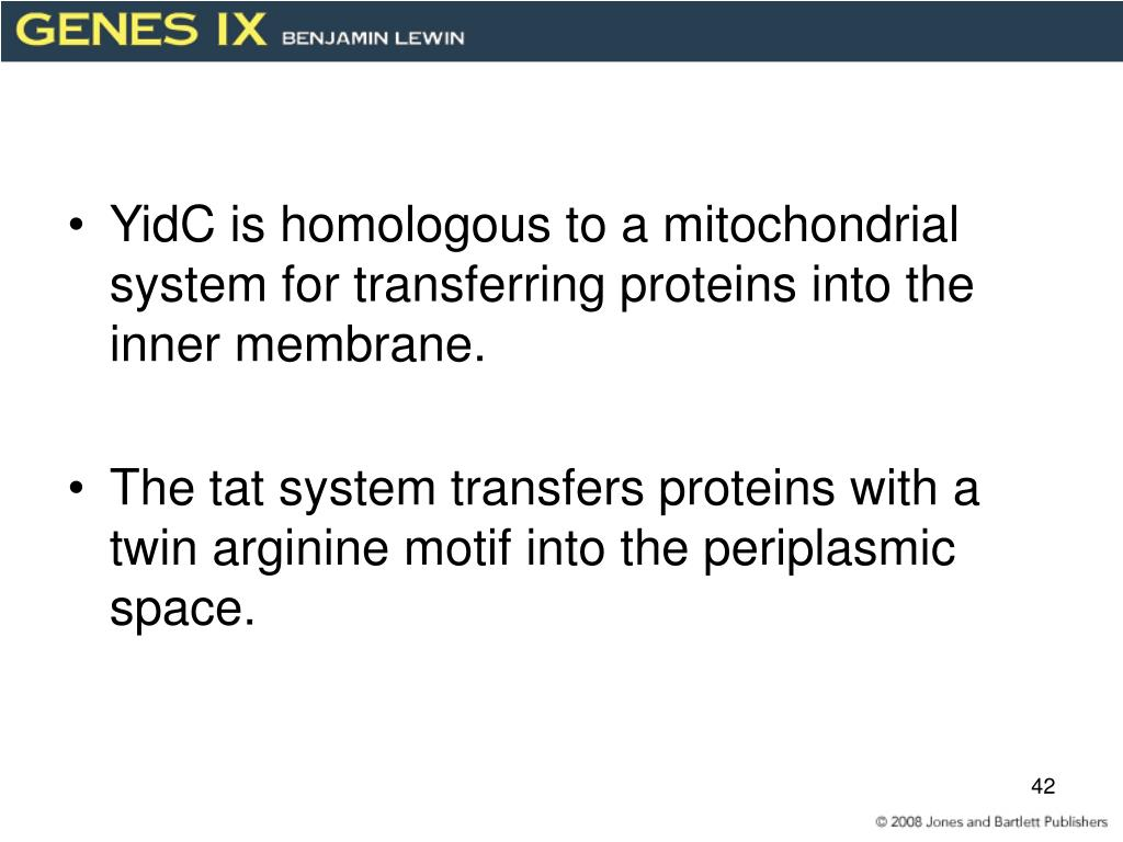 YidC is homologous to a mitochondrial system for transferring proteins into the inner membrane.