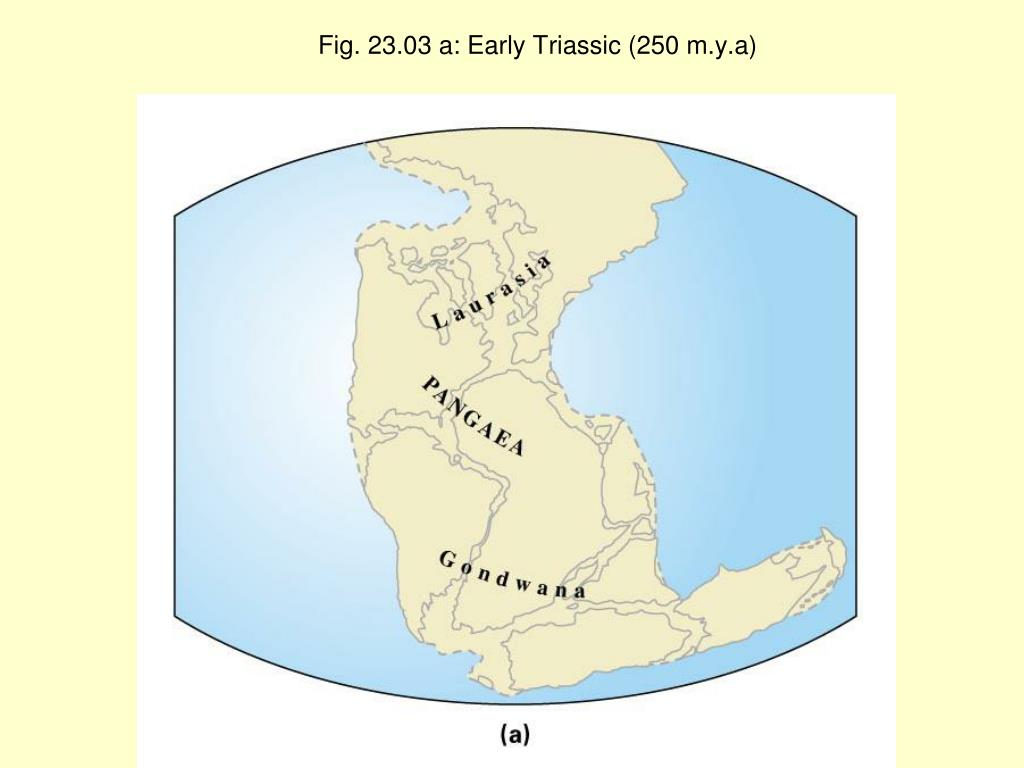 Fig. 23.03 a: Early Triassic (250 m.y.a)