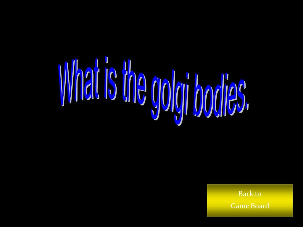 What is the golgi bodies.