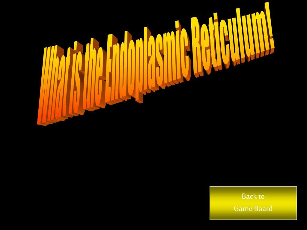 What is the Endoplasmic Reticulum!
