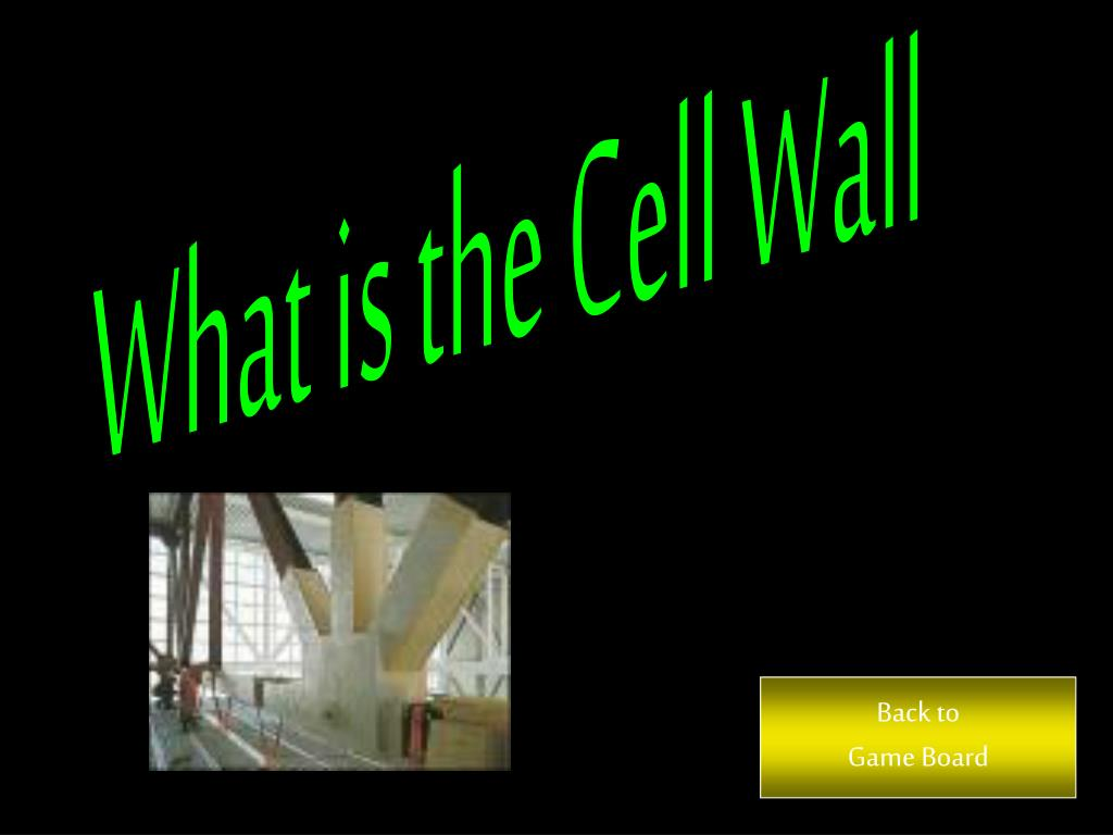 What is the Cell Wall