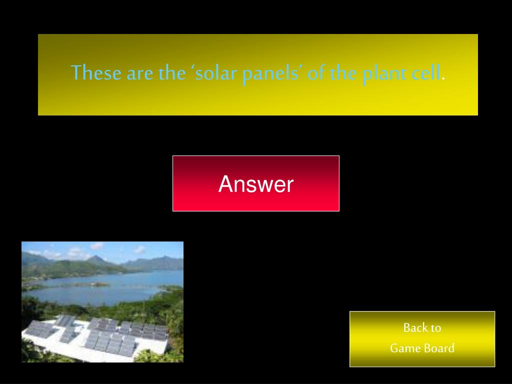 These are the 'solar panels' of the plant cell