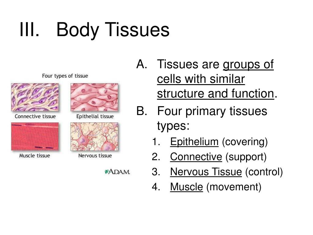 III.   Body Tissues