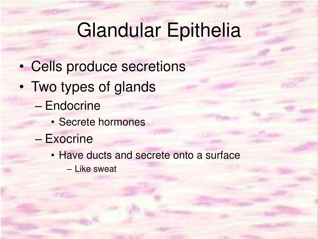 Glandular Epithelia