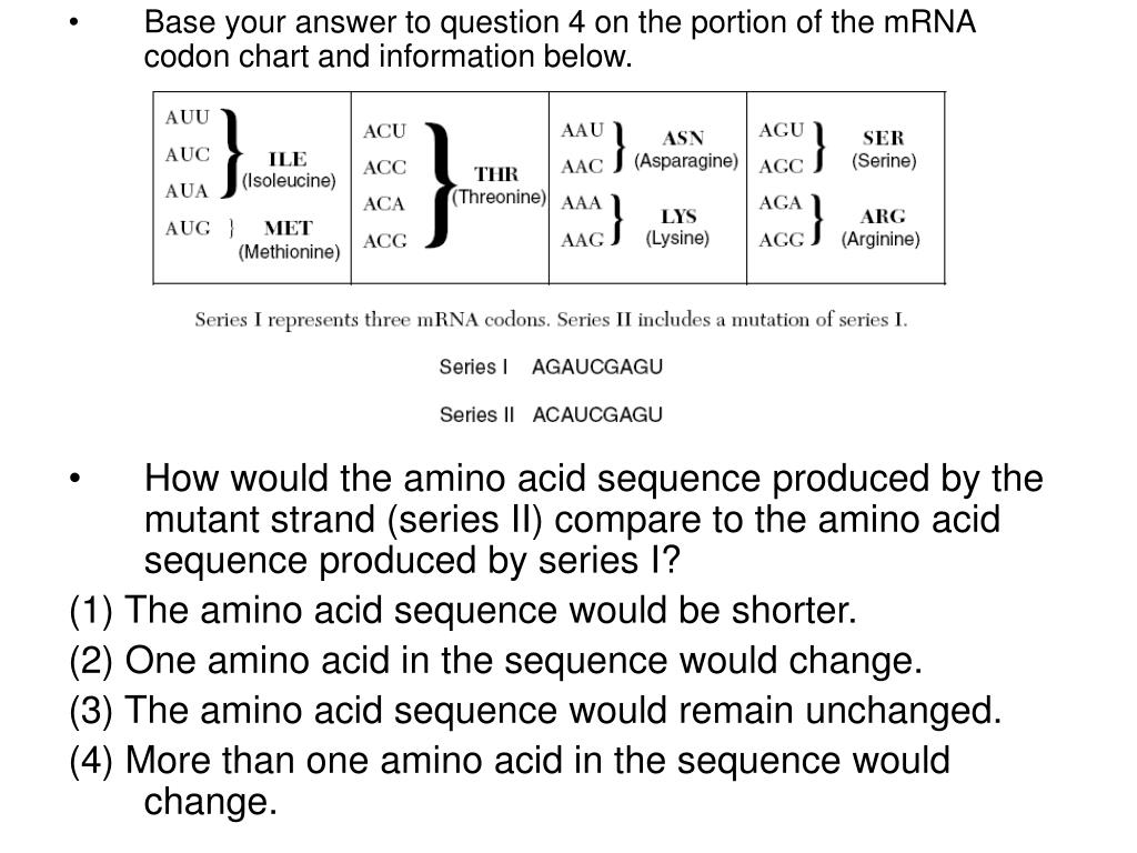 Base your answer to question 4 on the portion of the mRNA codon chart and information below.