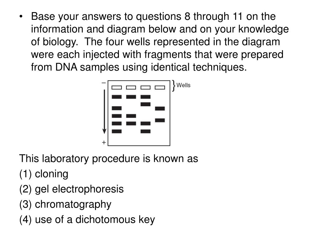Base your answers to questions 8 through 11 on the information and diagram below and on your knowledge of biology.  The four wells represented in the diagram were each injected with fragments that were prepared from DNA samples using identical techniques.