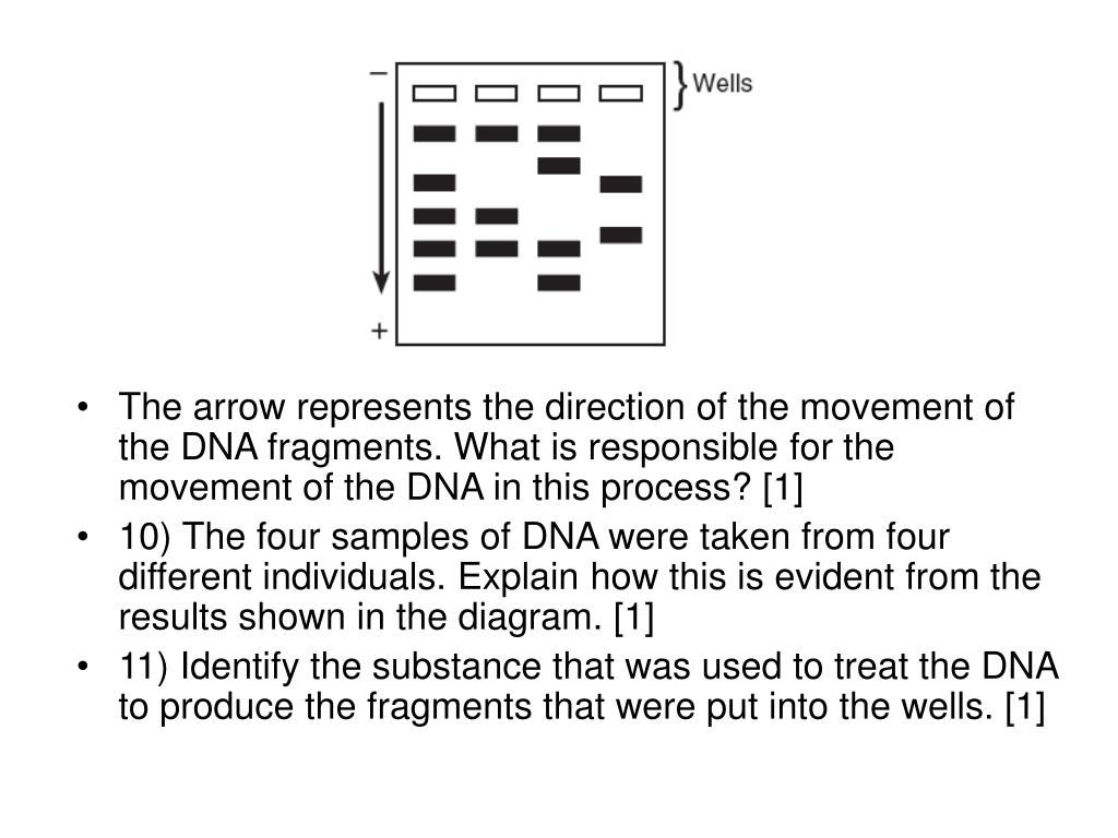 The arrow represents the direction of the movement of the DNA fragments. What is responsible for the movement of the DNA in this process? [1]